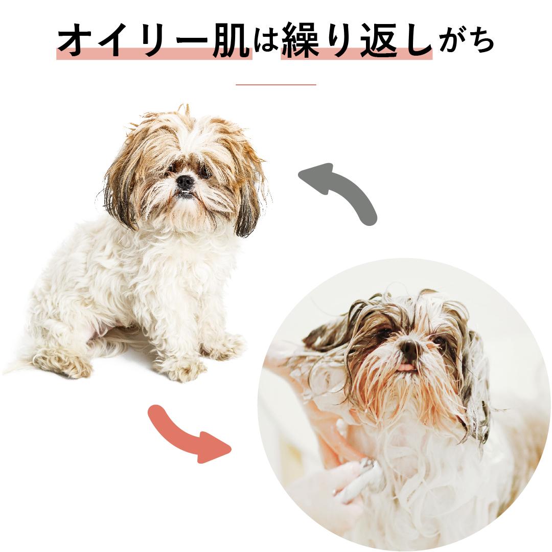 ケラトラックスは,肌質を根本から改善することで、シャンプーしても繰り返してしまう犬の脂っぽい肌を健康にします。